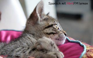 0. Die Katze- Spanisch mit AbrilFM lernen