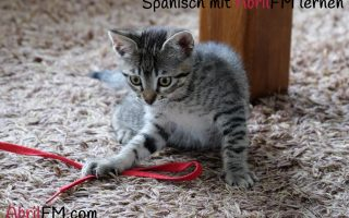 1. Die Katze- Spanisch mit AbrilFM lernen
