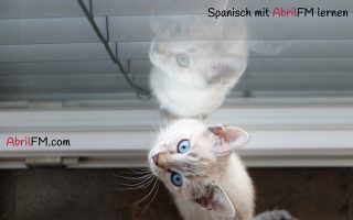 10. Die Katze- Spanisch mit AbrilFM lernen