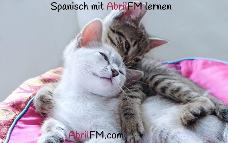 100. Die Katze- Spanisch mit AbrilFM lernen