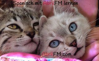 101. Die Katze- Spanisch mit AbrilFM lernen