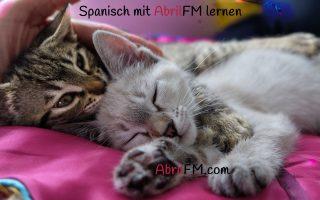 102. Die Katze- Spanisch mit AbrilFM lernen