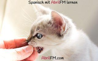 103. Die Katze- Spanisch mit AbrilFM lernen