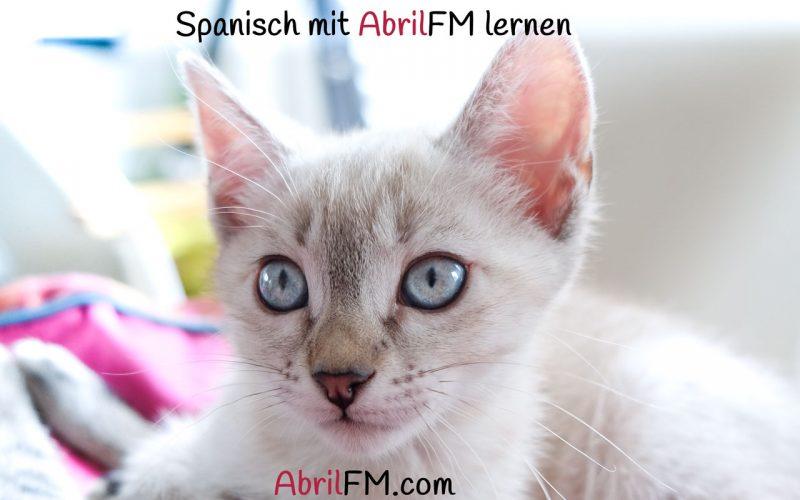 104. Die Katze- Spanisch mit AbrilFM lernen