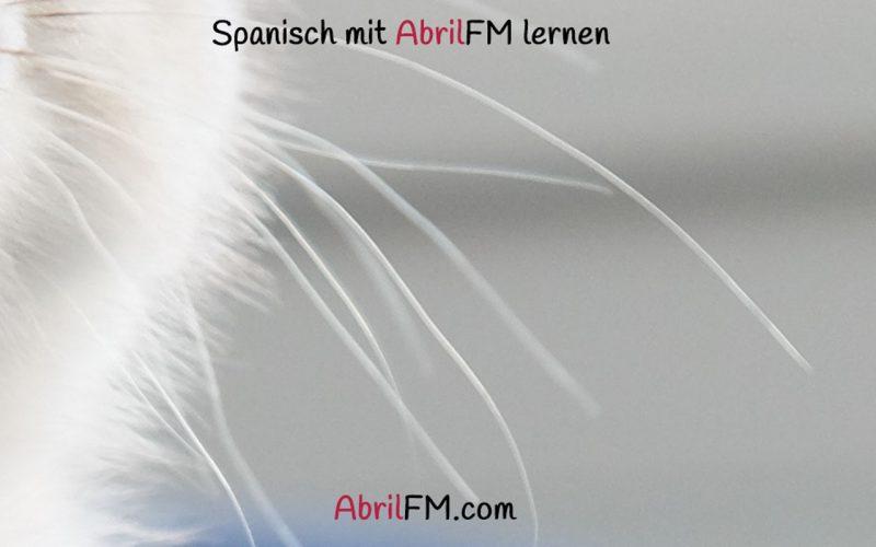 105. Die Katze- Spanisch mit AbrilFM lernen