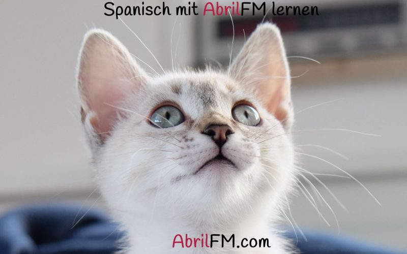 106. Die Katze- Spanisch mit AbrilFM lernen