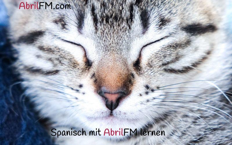 108. Die Katze- Spanisch mit AbrilFM lernen