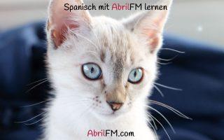110. Die Katze- Spanisch mit AbrilFM lernen