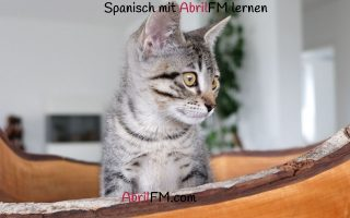 111. Die Katze- Spanisch mit AbrilFM lernen