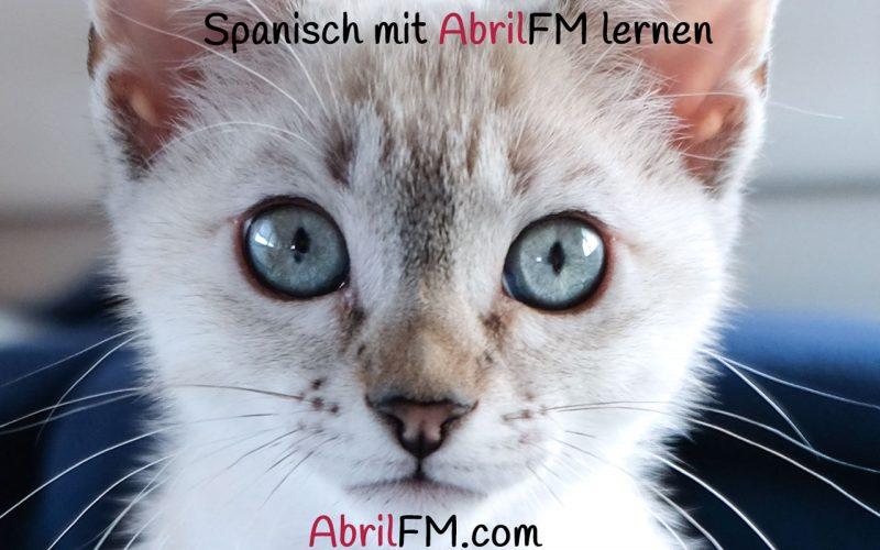 113. Die Katze- Spanisch mit AbrilFM lernen