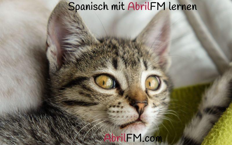 114. Die Katze- Spanisch mit AbrilFM lernen