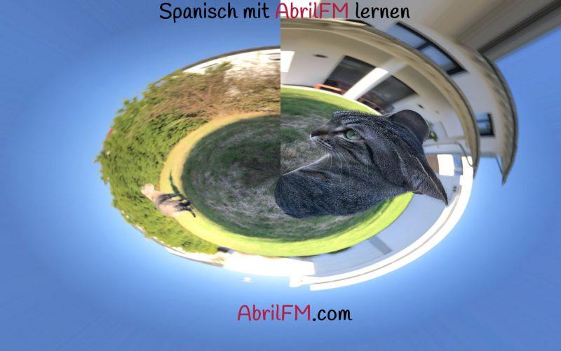 115. Die Katze- Spanisch mit AbrilFM lernen
