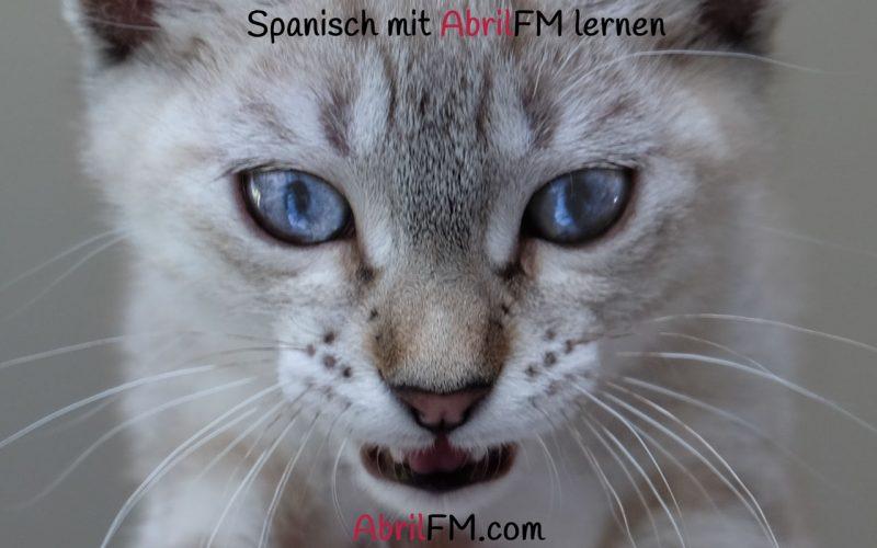 116. Die Katze- Spanisch mit AbrilFM lernen