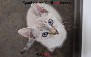 117. Die Katze- Spanisch mit AbrilFM lernen