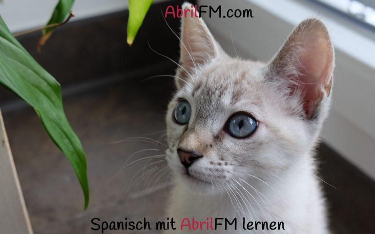 118. Die Katze- Spanisch mit AbrilFM lernen