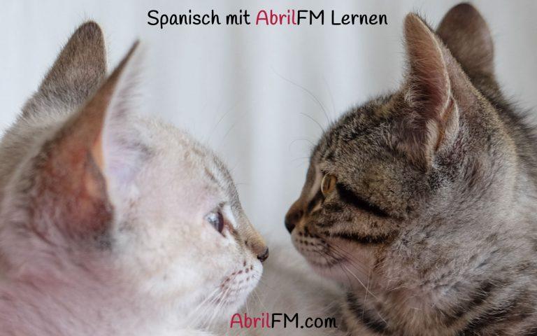 119. Die Katze- Spanisch mit AbrilFM lernen