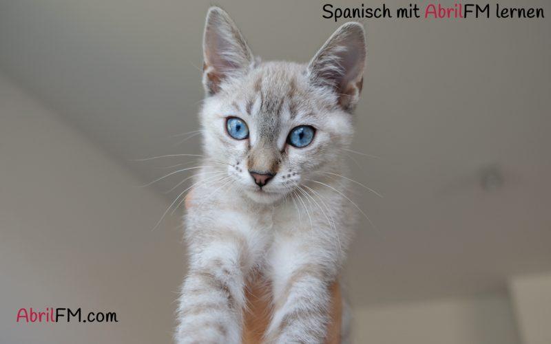 12. Die Katze- Spanisch mit AbrilFM lernen