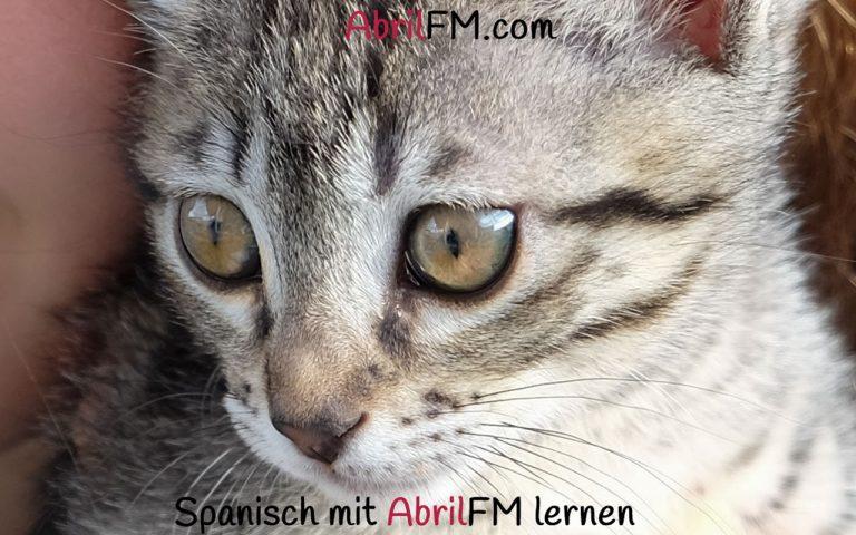 120. Die Katze- Spanisch mit AbrilFM lernen