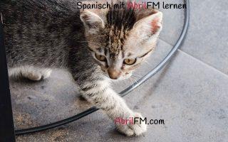 121. Die Katze- Spanisch mit AbrilFM lernen