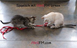 122. Die Katze- Spanisch mit AbrilFM lernen