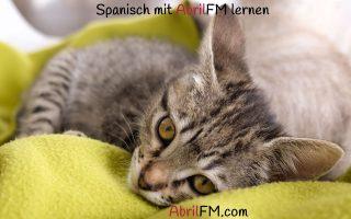 123. Die Katze- Spanisch mit AbrilFM lernen