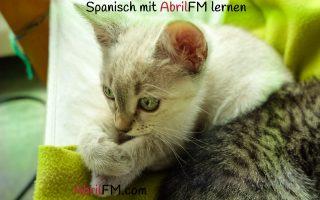 124. Die Katze- Spanisch mit AbrilFM lernen