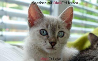 125. Die Katze- Spanisch mit AbrilFM lernen