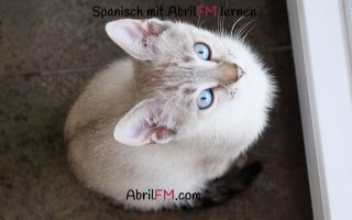 126. Die Katze- Spanisch mit AbrilFM lernen