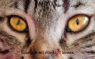 127. Die Katze- Spanisch mit AbrilFM lernen