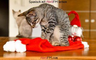 128. Die Katze- Spanisch mit AbrilFM lernen