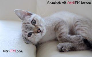 13. Die Katze- Spanisch mit AbrilFM lernen