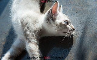 130. Die Katze- Spanisch mit AbrilFM lernen