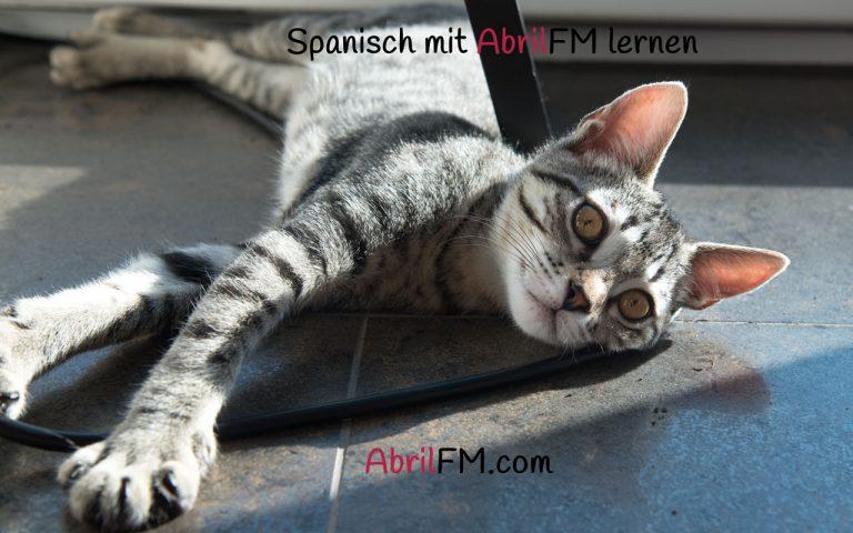 131. Die Katze- Spanisch mit AbrilFM lernen