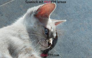 132. Die Katze- Spanisch mit AbrilFM lernen