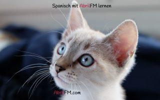 133. Die Katze- Spanisch mit AbrilFM lernen