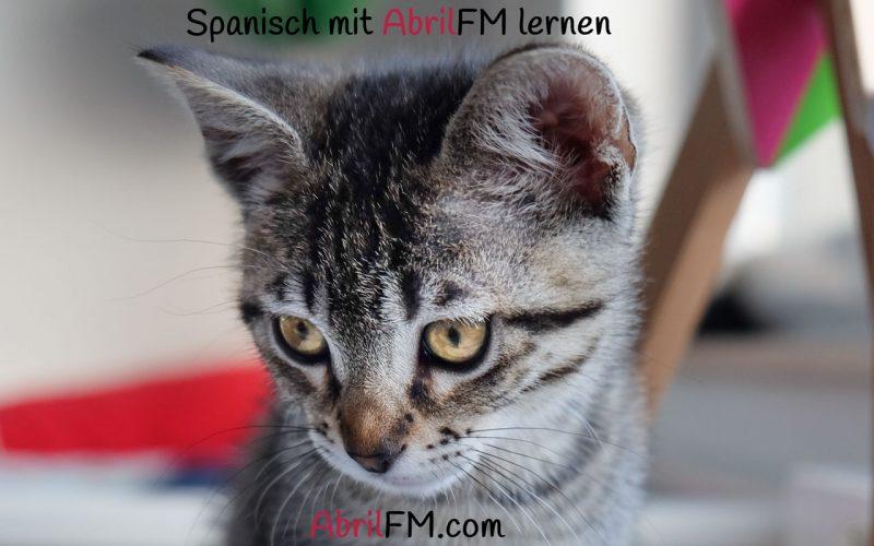 134. Die Katze- Spanisch mit AbrilFM lernen