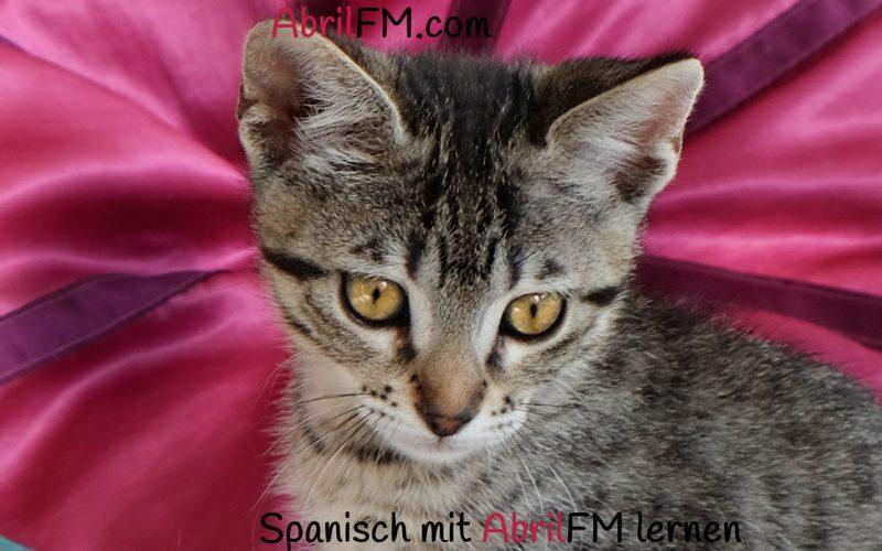 135. Die Katze- Spanisch mit AbrilFM lernen
