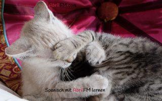 136. Die Katze- Spanisch mit AbrilFM lernen