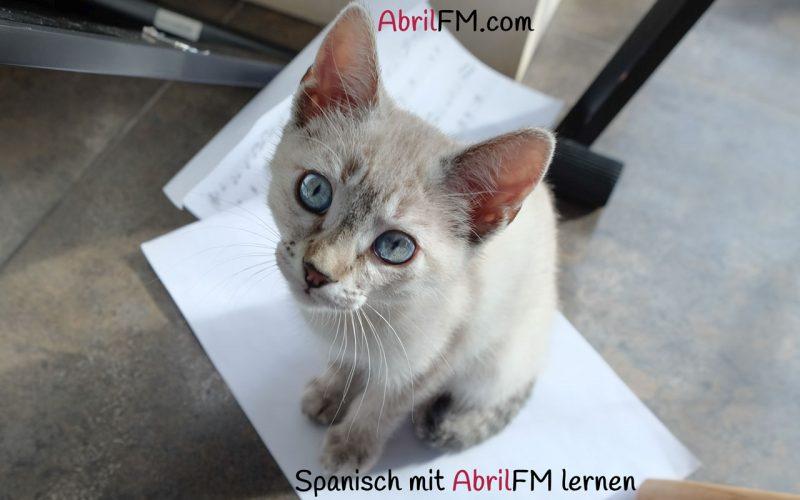 137. Die Katze- Spanisch mit AbrilFM lernen