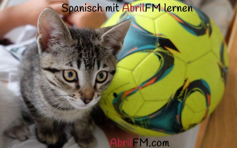 138. Die Katze- Spanisch mit AbrilFM lernen