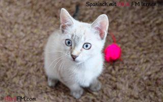 14. Die Katze- Spanisch mit AbrilFM lernen