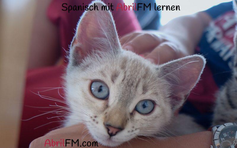 140. Die Katze- Spanisch mit AbrilFM lernen