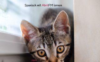 141. Die Katze- Spanisch mit AbrilFM lernen