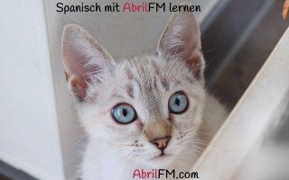 142. Die Katze- Spanisch mit AbrilFM lernen