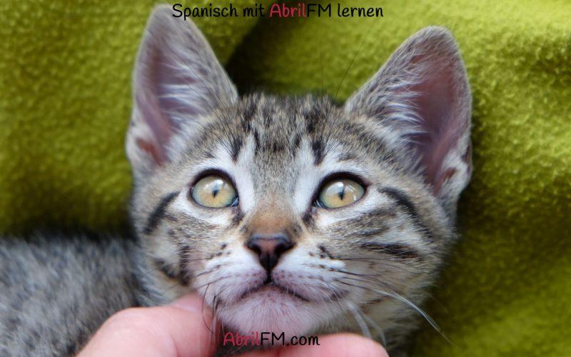 143. Die Katze- Spanisch mit AbrilFM lernen
