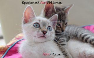 144. Die Katze- Spanisch mit AbrilFM lernen