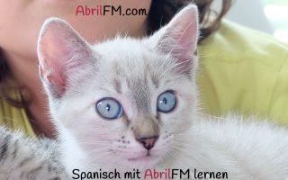 146. Die Katze- Spanisch mit AbrilFM lernen
