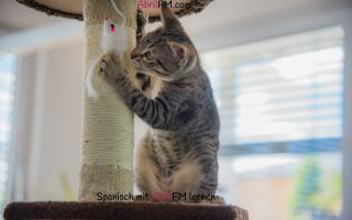 147. Die Katze- Spanisch mit AbrilFM lernen
