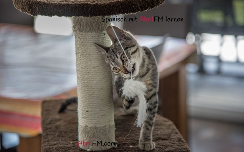148. Die Katze- Spanisch mit AbrilFM lernen
