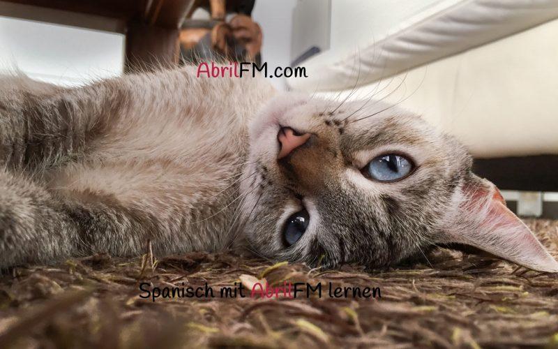 149. Die Katze- Spanisch mit AbrilFM lernen
